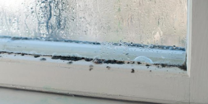 How to Limit Mold Growth in The Winter Months