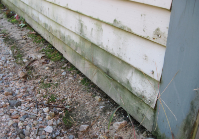 How to Prevent Mold on Your Home's Siding