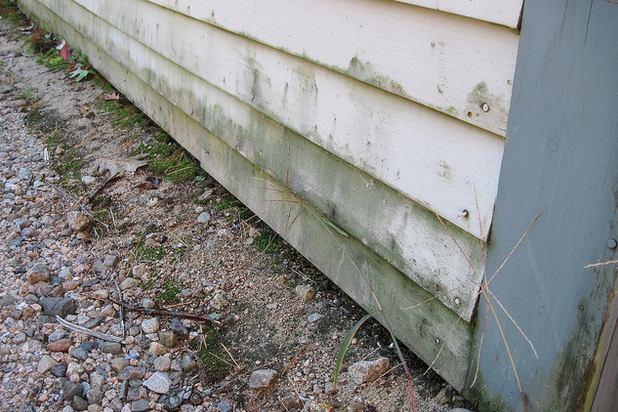 How To Prevent Mold On Home S Siding Servicemaster